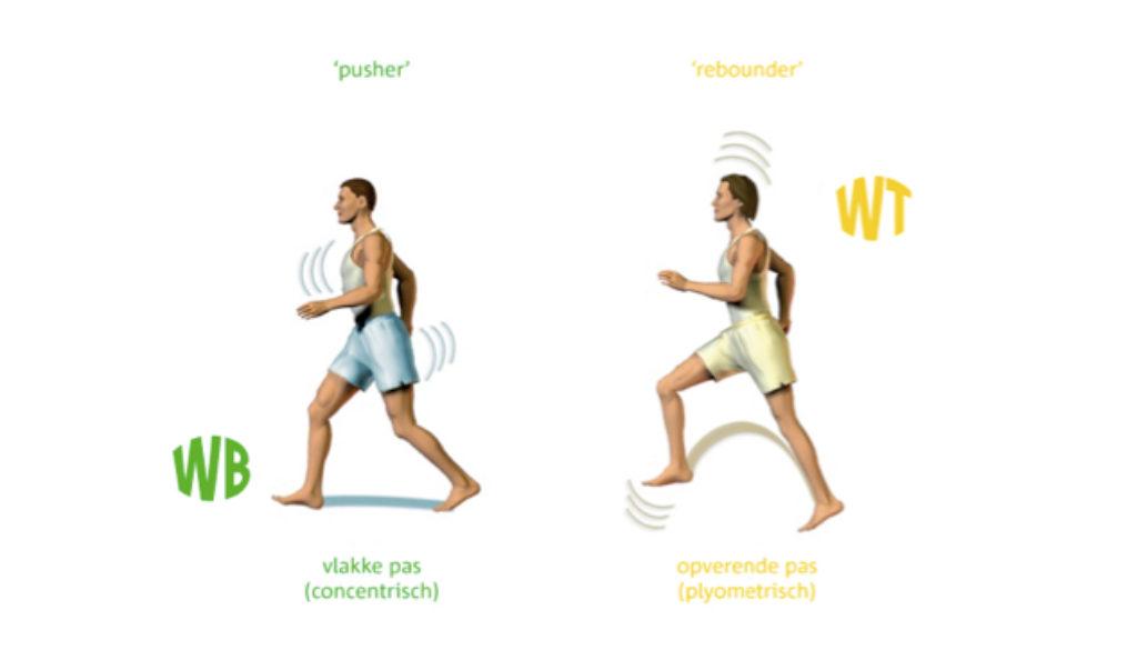 WB en WT loopexpressie